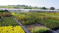 Dış mekan süs bitkisi üreterek ek gelir elde etmek