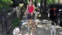 Evcil Hayvan Bakıcılığı